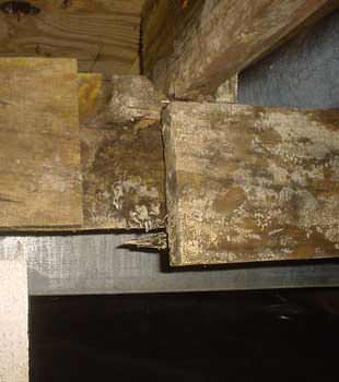 Extensive basement rot found in Rochester by TC Hafford Basement Systems