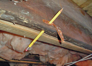 Destroyed crawl space structural wood in Bath