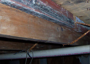 Rotting, decaying wood from mold damage in Caribou